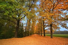 **Parco di Monza, Monza: See 1,481 reviews, articles, and 414 photos of Parco di Monza, ranked No.1 on TripAdvisor among 80 attractions in Monza.