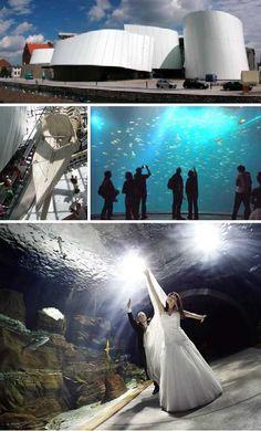 ... Stories: 7 More Amazing Public Aquariums Aquarium, Public and Fish
