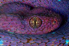 Purple Snake with a beady eye~♛