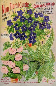Conard & Jones New Floral Guide 1900