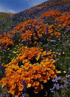 ✯ April's Gift  - Tehachapi Mountains, California