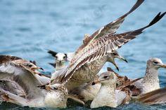 Bird Vogue by Zee Sage, via Behance