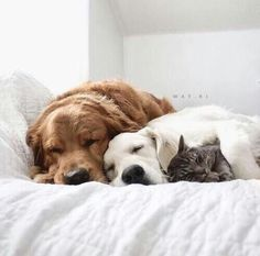 Картинка с тегом «dog, animal, and cat»