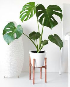 Raised Copper Pot Plant Stand DIY // Tutorial - Pure Sweet Joy - Raised Copper Pipe Pot Plant Is really a few points to assist you to properly increase your brand new plants. House Plants Decor, Plant Decor, Plant Art, Low Maintenance Indoor Plants, Plantas Indoor, Decoration Plante, Home Decoration, Plant Aesthetic, Pot Plante
