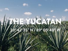 The Citizenry | Making Mexico // The Video   – The Citizenry | THE YUCATAN