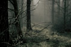 Shared by Malefica. Find images and videos about photography, nature and winter on We Heart It - the app to get lost in what you love. Twilight, The Embrace, Over The Garden Wall, Dark Forest, Magical Forest, Haunted Forest, Foggy Forest, The Great Outdoors, Mists