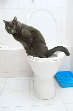 Eco-Friendly Kitty: How to Reduce Your Cat's Carbon Pawprint | Does your cat do this?