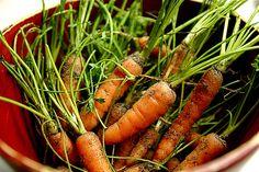 Baby Organic Carrots from Garden 10-6-09IMG_6718 by stevendepolo, via Flickr