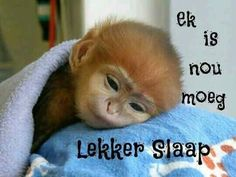 This Is A Baby Monkey - Alligator Sunglasses Maria Jose, Video Games For Kids, Kids Videos, Best Memes, Funny Memes, True Memes, Afrikaanse Quotes, Goeie Nag, Strong Quotes