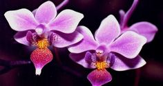Resultado de imagen para flora colombiana