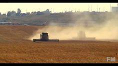 2015 Wheat Harvest in Montana. !FM!.