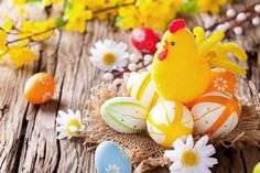 Easter colored eggs on wood ...  abundance, background, blossom, blue, board, brown, celebration, chicken, colored, colorfull, country, daisy, decoration, easter, eco, ecology, egg, flower, food, gap, holiday, horizontal, joy, lifestyle, natural, nature, nest, old, plank, pull, raw, religion, rough, rural, rustic, shell, space, splinter, spring, springtime, traditional, white, wood, wooden