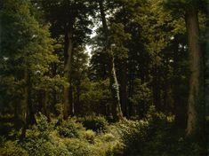 Der Eichenwald by Robert Zünd (939PA) — Atlas of Places Hudson River School Paintings, Oak Forest, Romanticism, Landscape Paintings, Landscape Design, Oil On Canvas, Wall Art, Nature, Image