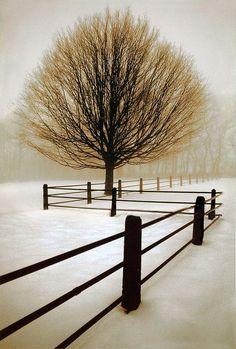 Solitude.  Photo: David Lorenz Winston by Plum leaves, via Flickr