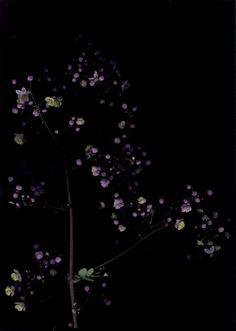 Get the Look: 50 Shades of Black - Residence Dark Flowers, Beautiful Flowers, Purple Flowers, Midnight Garden, Shades Of Black, 50 Shades, Black Backgrounds, Art Photography, Plants