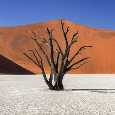 Gems of Namibia - Anshar Photography Cool Photos, Beautiful Pictures, Buy Gems, Nature Tree, Landscape Pictures, Acacia, Dune, Nature Photography, Fine Art Prints