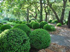 Rock Garden ideas - round boxwoods make me smile