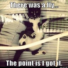 cats are the best.lol