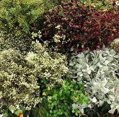Plantas, frutos, colorido, energía... Llena tu hogar de las plantas que necesites. Te esperamos con muchas flores🌺🌻🍊🍋🍉  #instadeco #decoration #flowerstyle #interiorlovers #interiordetails #interiorforyou #interiordesignideas #interiorstyle #interiorandhome #interiores