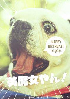 お誕生日おもしろお祝い画像&寄書き無料テンプレートのハピバフォト Happy Birthday Animals, Happy Birthday Messages, Animal Birthday, Birthday Photos, Happy Mothers Day, My Friend, French Bulldog, My Favorite Things, Funny