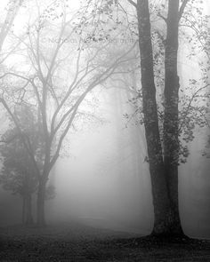 * I have this affinity for trees....