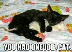 One. Job.... Really cute tho
