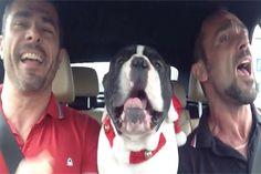 """Outro cachorro cantando """"Let It Go"""" - http://metropolitanafm.uol.com.br/novidades/entretenimento/outro-cachorro-cantando-let-go"""