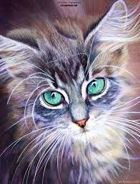 Image result for 3 colored  cat