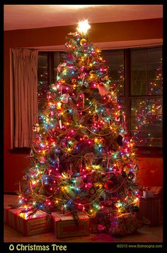Yellow Star At The Top With Colorful Christmas Tree Lighting Best Christmas Lights, Pretty Christmas Trees, Decorating With Christmas Lights, Colorful Christmas Tree, Diy Christmas Tree, Outdoor Christmas Decorations, Christmas Colors, Christmas Time, Christmas Tree Colored Lights