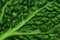 Chlorophyll is what gives leafy greens and blue green algae their green color. A pigment involved with photosynthesis, chlorophyll also promotes health.
