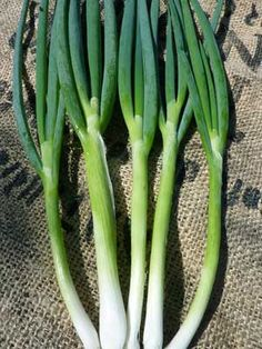 Fantastic for green onions. Organic Evergreen White produces clusters of 5-9 long, tall, crisp, silvery white stalks. Amazing flavor for a non-bulbing onion that is slow to go to seed. Good for spring or fall planting.