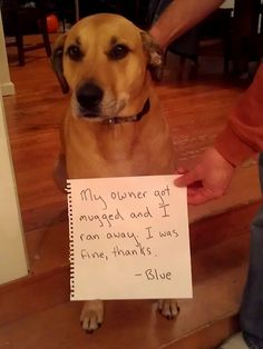 This really happened.  http://dog-shaming.com/post/34564393923/this-really-happened