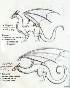 and Wyvern. Know the difference Dragon and Wyvern. Know the differenceDragon and Wyvern. Know the difference Drawing Techniques, Drawing Tips, Drawing Reference, Drawing Sketches, Drawing Drawing, Drawing Stuff, Figure Drawing, Realistic Drawings, Easy Drawings