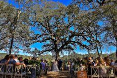 Tim_Haberg_Photography_B_R_Cohn_Winery_Wedding