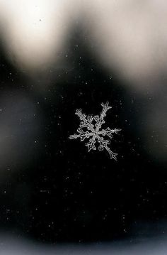 Image discovered by wika. Find images and videos about winter, christmas and snow on We Heart It - the app to get lost in what you love. Art Photography, Street Photography, Snowflake Photography, Winter Photography, Winter Schnee, Fotografia Macro, I Love Winter, Winter Beauty, Pics Art