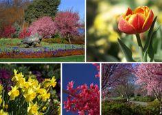 Dallas Blooms 2014, Dallas Arboretum, Blooms, Flowers #DallasBlooms30, What's in bloom