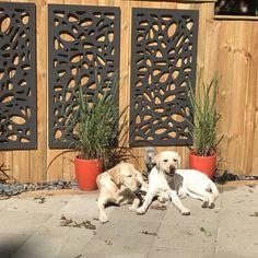 Pergola Above Garage Door Backyard Fences, Backyard Projects, Backyard Landscaping, Corner Landscaping, Garden Projects, Garden Fence Panels, Garden Gates, Fence Art, Decorative Screen Panels