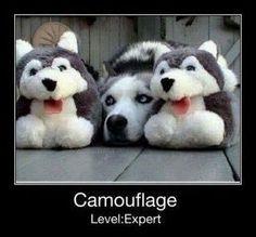 Camouflage - Level Expert