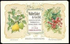 Adv. Trade Card - Walter Baker & Co. Ltd. Fine Chocolates Fruits and Blooms