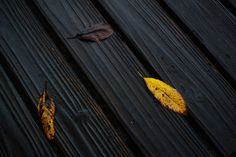 Three Leaves | Flickr - Photo Sharing!