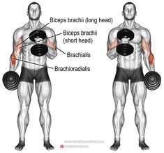 Cross-body hammer curl instructions and video Cross body hammer curl. An isolation pull exercise. Main muscles worked: Brachioradialis, Biceps Brachii (especially the long head), and Brachialis. Muscle Fitness, Fitness Tips, Gain Muscle, Workout Fitness, Muscle Men, Build Muscle, Enjoy Fitness, Video Fitness, Workout Men
