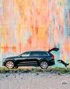 The Volvo is a luxury SUV that combines elegant design with world-class safety features—for you and your dog. Momo, the beloved Border Collie of photographer Andrew Knapp, jumps in. Gold Mercedes, Metal Deck Railing, Cayman Gt4, Volvo Xc60, Volvo Cars, World Class, Luxury Suv, Swedish Design, Border Collie
