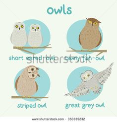 OWL Stock Photos, Images, & Pictures | Shutterstock