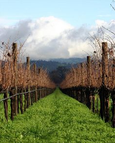 Napa Valley Vineyards – California, United States