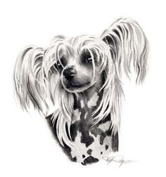 CHINESE CRESTED Dog Art Print Signed by Artist DJ от k9artgallery