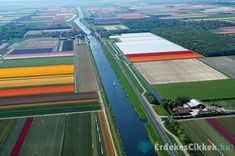 The Flying Tortoise: Norman Szkop's Wonderful Aerial Images Of Tulip Fields In Bloom In North Holland. Tulips Holland, Dutch Tulip, Voyager Loin, Aerial Images, Tulip Fields, French Photographers, Belleza Natural, Aerial Photography, Landscape Photos