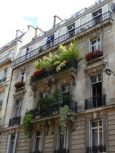 Le balcon aux bambous de la rue de Phalsbourg (Paris Balcony with bamboo and ivory geraniums, ru
