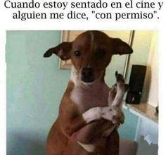 Jajajaja pero pasan como 5 personas :'v #memes #perros #mascotas