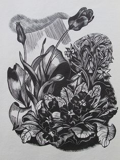 Organic Gardening Supplies Needed For Newbies John Nash British, From The Book Flowers And Faces By H. Bates, Published By The Golden Cockerel Press, Wood Engraving Illustrations, Illustration Art, Zentangle, John Nash, Wood Engraving, Engraving Ideas, Engraving Tools, Still Life Artists, Paisley