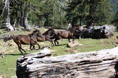 Εθνικός Δρυμός Πίνδου (Βάλια Κάλντα)   Δάση   Φύση   Ν. Ιωαννίνων   Περιοχές   WonderGreece.gr